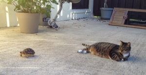 Kada and Delia relaxing on the patio